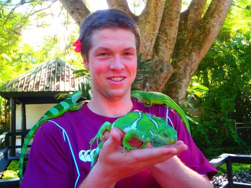 Monuriki Crested Iguana is genetically unique