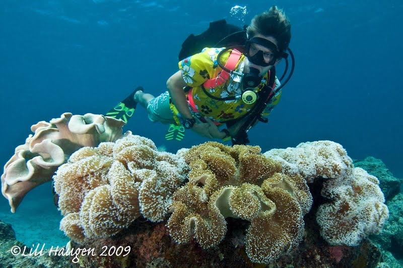 Diveaway Fiji on Coral Coast, Fiji LILL HAUGEN