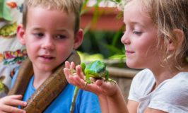 Interacting with the banded iguana and a boa (courtesy Kula Wild Adventure Park)